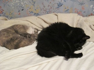 "After hours of exhausting practice, Smokey and Blackjack have finally perfected ""synchronized sleeping."" They are hoping this will be considered for the 2018 Olympics. In the meantime, they practice as often as possible."